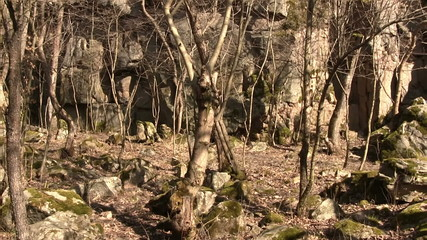 Panorama of trees and boulders in spring