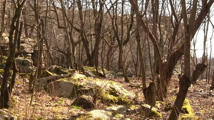 trees and boulders in spring. Landscape.