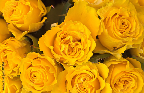 Nice - Yellow roses background
