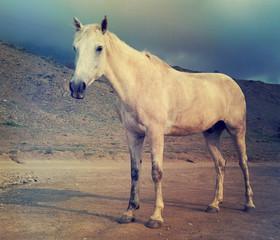 horse looks