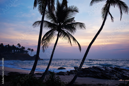 blue sunset and palm . Sri Lanka beach