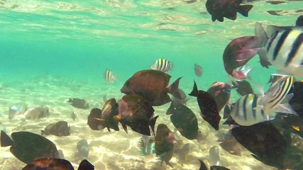 Beautiful colorful fish in Red sea. Egypt.