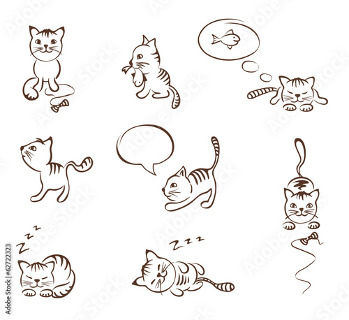 Collection of funny cats