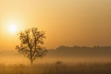 Indien, Uttarakhand, Ansicht von Mystic Morgen um Jim Corbett Nationalpark