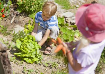 Deutschland, Bayern, Junge und Mädchen, pflücken Gemüse im Garten