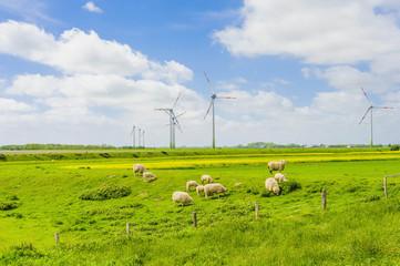 Deutschland, Schleswig -Holstein, Blick auf Schafe weiden in Feld-und Windkraftanlagen im Hintergrund