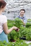 Deutschland, München, Mann und Frau im Gewächshaus zwischen Petersilie Pflanzen