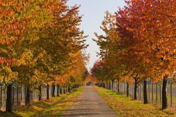Deutschland, Stuttgart, Allee mit Laubbäumen im Herbst