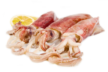 fresh squid isolated on white background