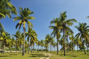 Asien, Indonesien, Pfad durch Palmen am Strand von Kuta