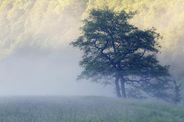 Österreich, Oberösterreich, Nationalpark Thayatal, Wiese und Bäume, Nebel