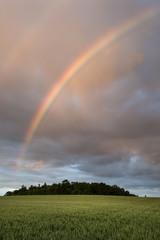 Deutschland, Baden Württemberg, Konstanz, Blick auf Weizenfeld mit Regenbogen