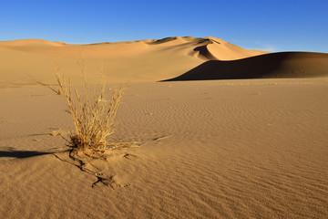 Algerien, Sahara, Ansicht der Sanddünen Erg Takaraft
