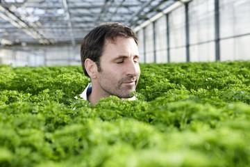 Deutschland, München, Mann im Gewächshaus zwischen Petersilie Pflanzen