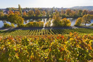 Deutschland, Stuttgart, Ansicht der Traubenweinberg in autmn
