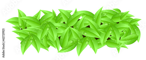 Banner made of leaves with space text isolated