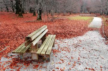 bench on autum in park