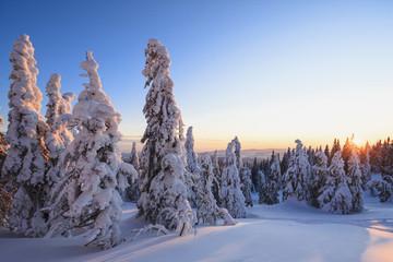 Deutschland, Bayern, Blick auf schneebedeckte Bäume im Sonnenuntergang am Bayerischen Wald