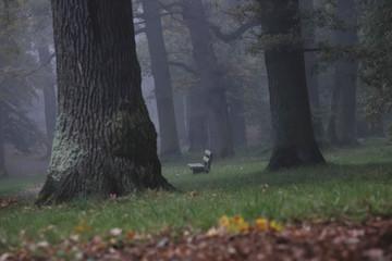 Deutschland, neblig Eichenwald im Herbst