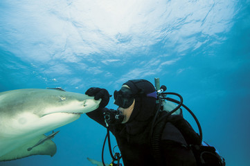 Bahamas, Taucher spielen mit atlantic Lemon shark