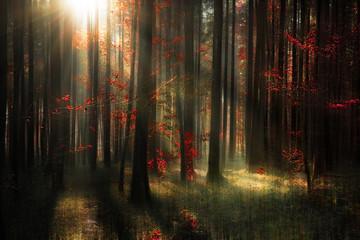Deutschland, Baden Württemberg, Blick auf den herbstlichen Wald