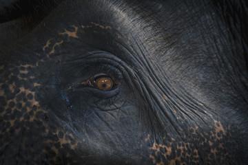 Thailand, Chiang Mai, Elephant Auge