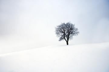 Vereinigtes Königreich, Schottland, Edinburgh, Ansicht von Baum im Schnee in der Calton Hill