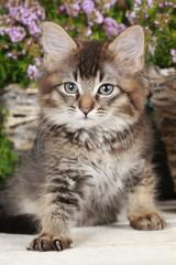 Tabby Kätzchen vor verschiedenen Kräutern