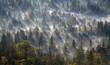 Deutschland, Bayern, Oberbayern, Icking, Pupplinger Au, Wald