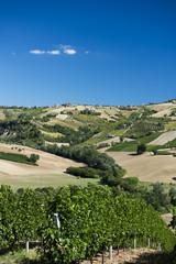 Italien, Blick auf Weinberg