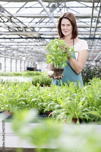 Deutschland, München, Seniorin im Gewächshaus mit Pflanzen Basilikum