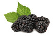 Pile of ripe blackberry with green leaves (isolated)