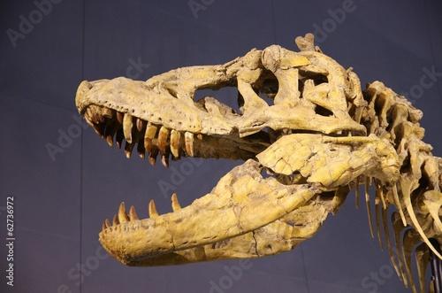 恐竜の頭部化石