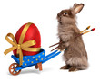 Funny Easter rabbit with a blue wheelbarrow and a red Easter egg