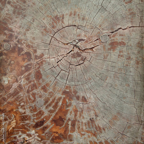 Wood structure grunge background