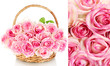 Collage of pink roses closeup
