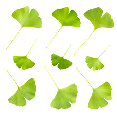 Collage of ginkgo biloba leaves isolated on white