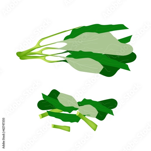 Fresh Green Chinese Broccoli on White Background