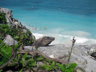 Iguana mirando la gente nadando en el mar