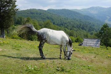 White Horse Grazing, Montenegro
