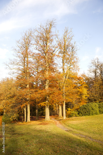golden autumn light on group of beech trees