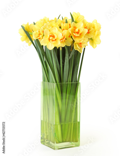 isolated narcissus