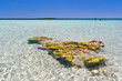 Shallow waters of Elafonisi beach, island of Crete