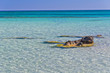 Shallow waters of Elafonisi beach, island of Crete