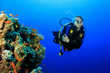 Scuba diver and coral reef underwater - 62758705