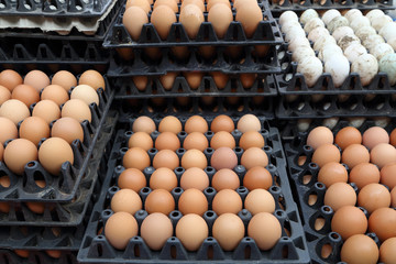 egg trays at the market
