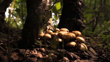 грибы, поганки в  лесу