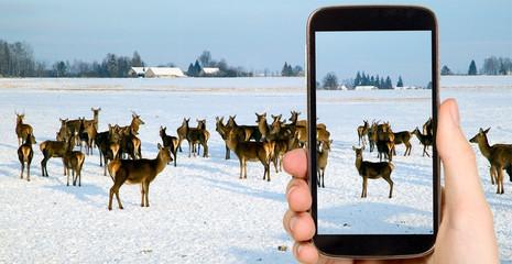 Man is taking photo of animals