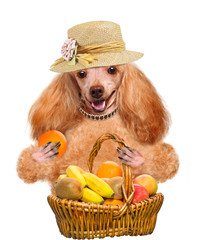 Dog with fruit