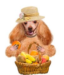 Dog with fruit